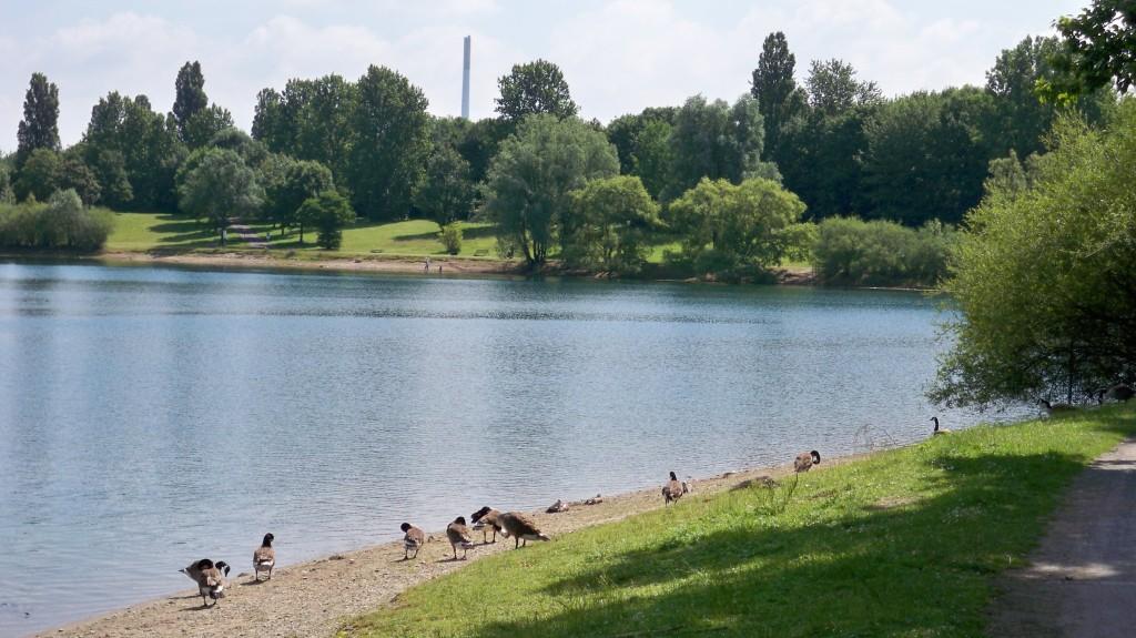 Enten am Fühlinger See Köln © Landesblog-NRW-braucht-das.de