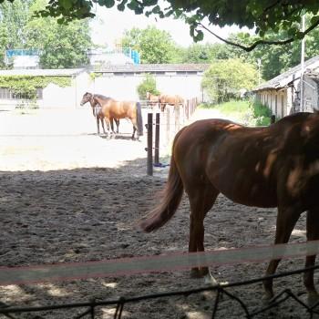 Pferde des Reitervereins Oranjehof am Fühlinger See © Landesblog NRW braucht das