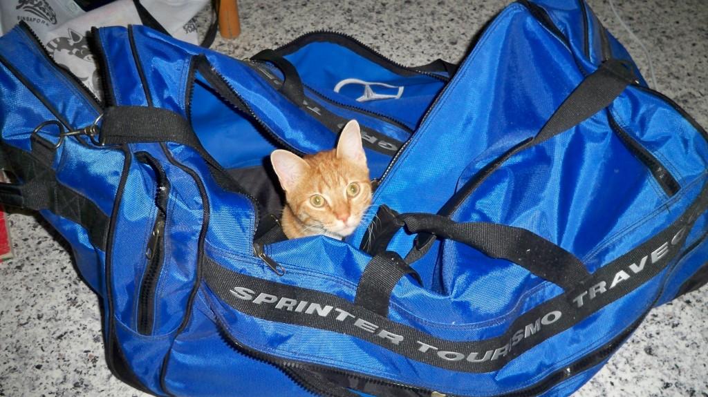 Katze versteckt sich in Tasche © landesblog-nrw-braucht-das.de