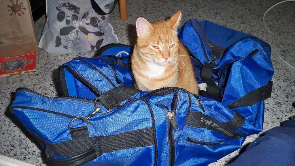 Katzen mögen Reisetaschen © landesblog-nrw-braucht-das.de