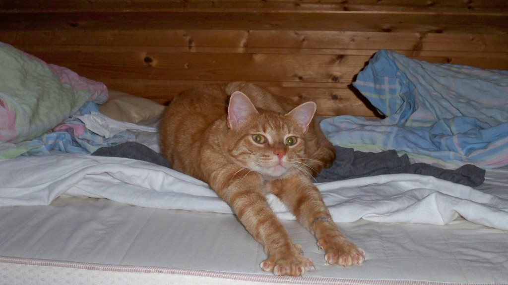 Katzen sind sehr einnehmende Tiere © landesblog-nrw-braucht-das.de