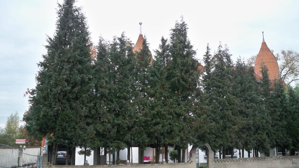 Haus Isenburg hinter Bäumen versteckt © Landesblog NRW