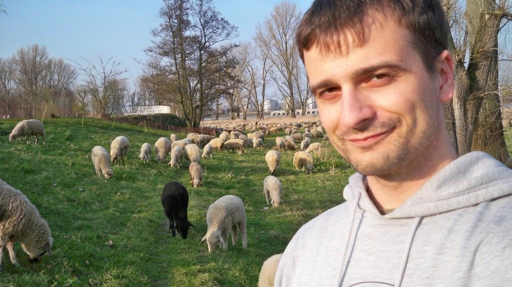 Schwarzes Schaf in der Herde