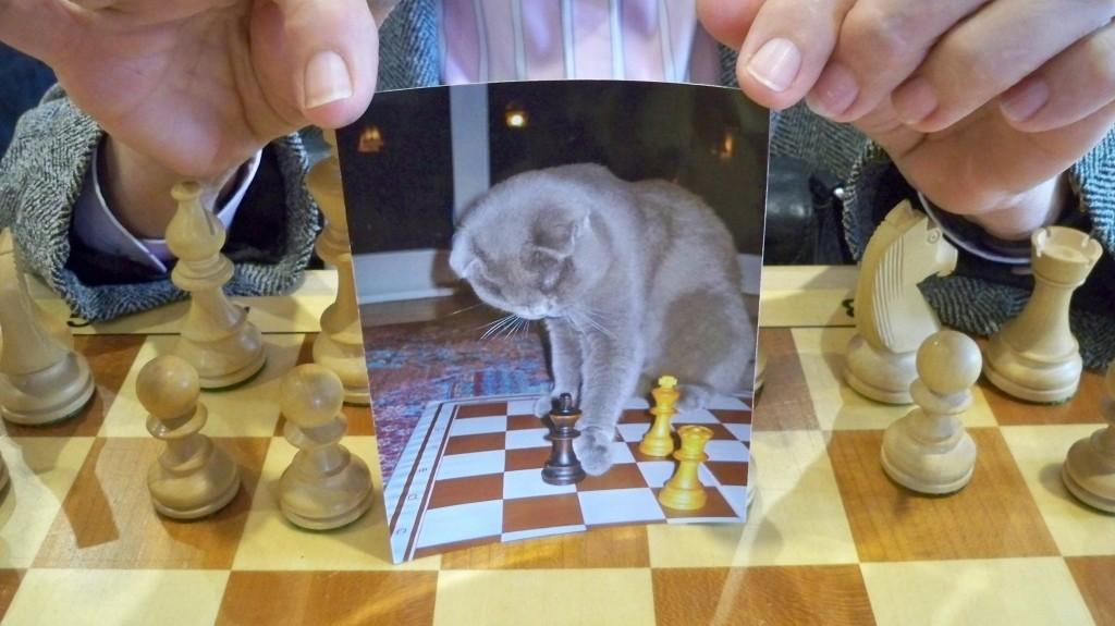 Schachkatze von Hedi Wahl © Landesblog NRW