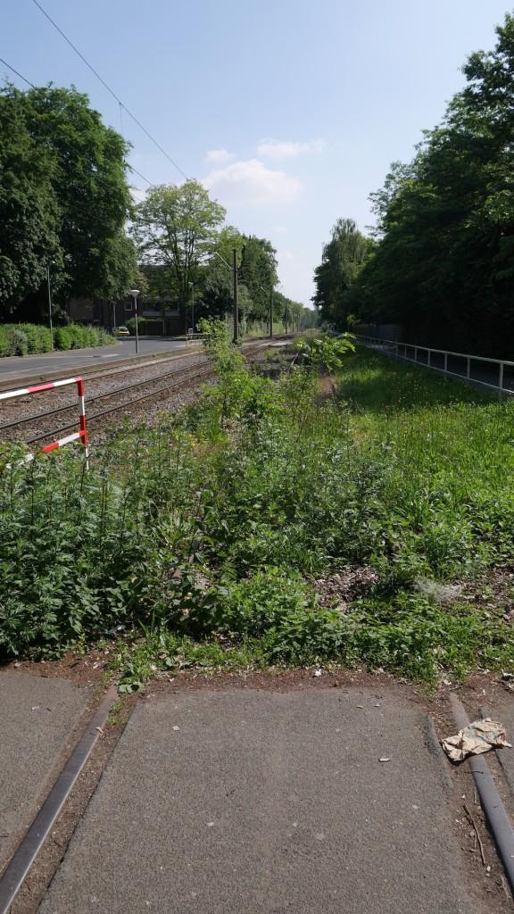 Überwuchertes überteertes Gleis an der Haltestelle Sandberg in Krefeld