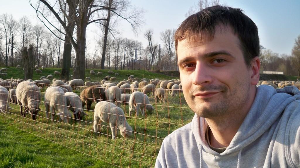 Ein Schaf wie du und ich