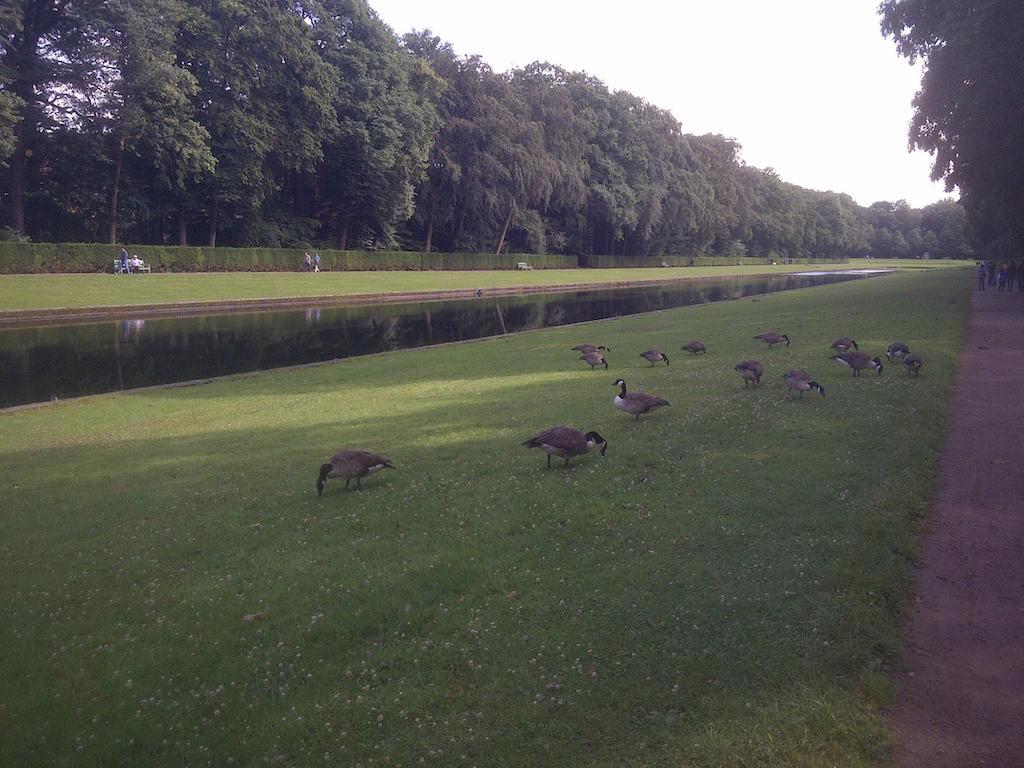 Gaense im Benrather Schlosspark