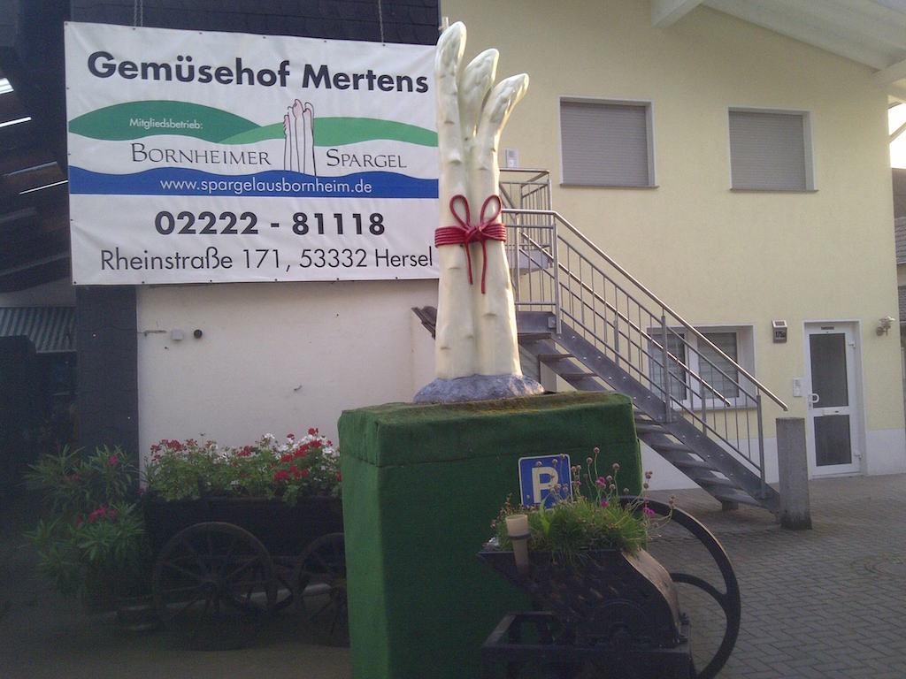 SPargel vom Gemuesehof Mertens in Hersel