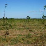 Panama, Kautschuk, TIMBERFARM – Unternehmer der Region #2