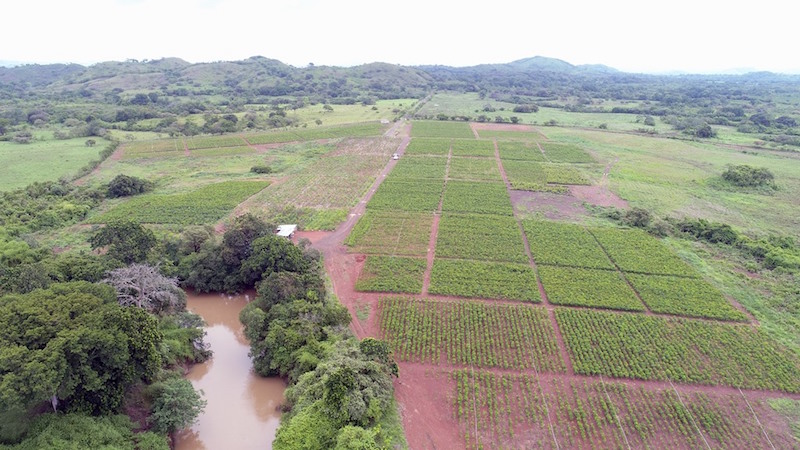 Timberfarm Plantage