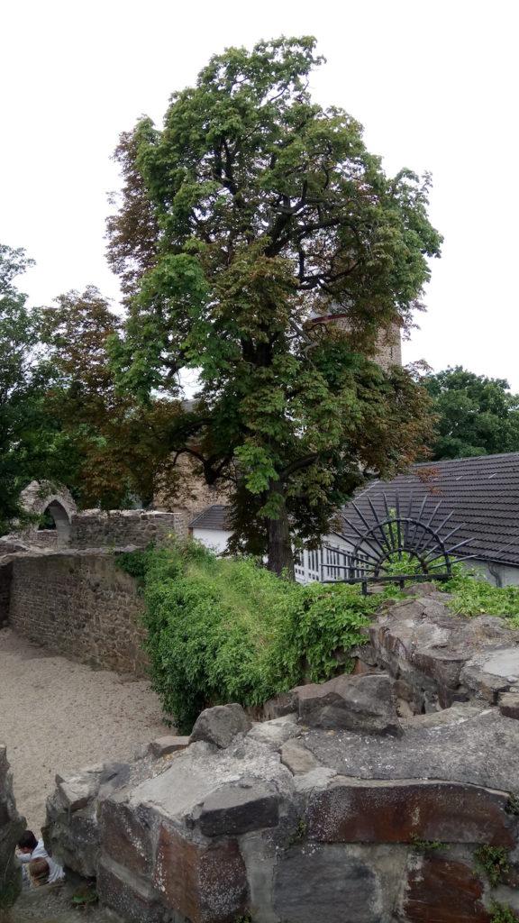 Rheinbacher Burg